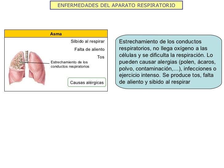 ENFERMEDADES DEL APARATO RESPIRATORIO Asma Silbido al respirar Falta de aliento Tos Estrechamiento de los conductos respir...