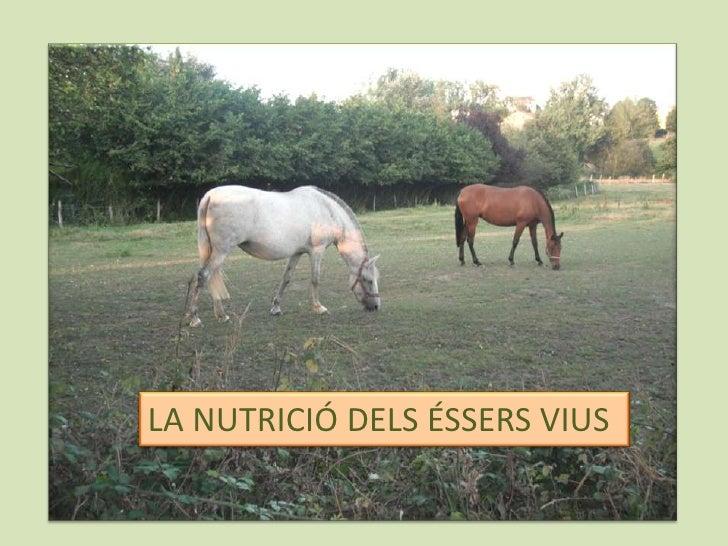 LA NUTRICIÓ DELS ÉSSERS VIUS<br />
