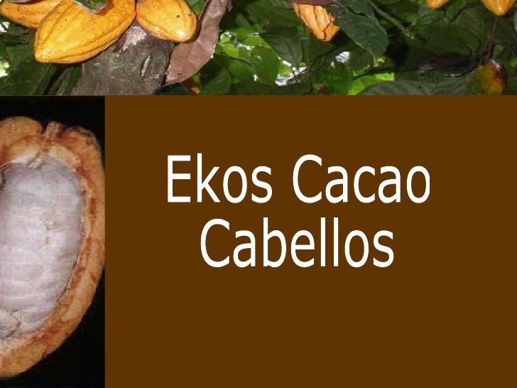 Ekos Cacao Cabellos
