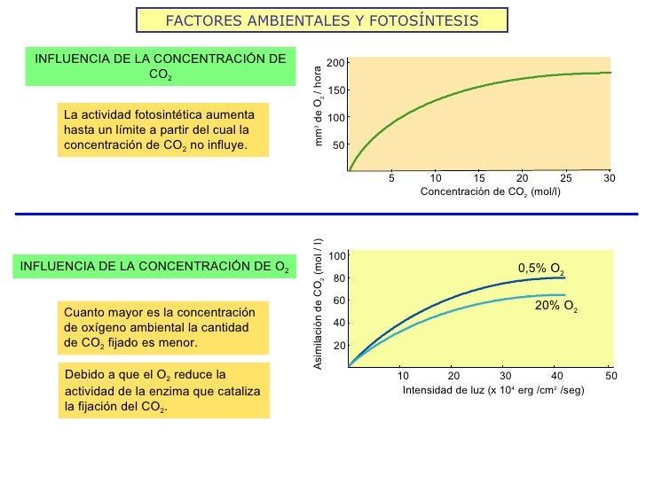 FACTORES AMBIENTALES Y FOTOSÍNTESIS INFLUENCIA DE LA CONCENTRACIÓN DE                                         200         ...