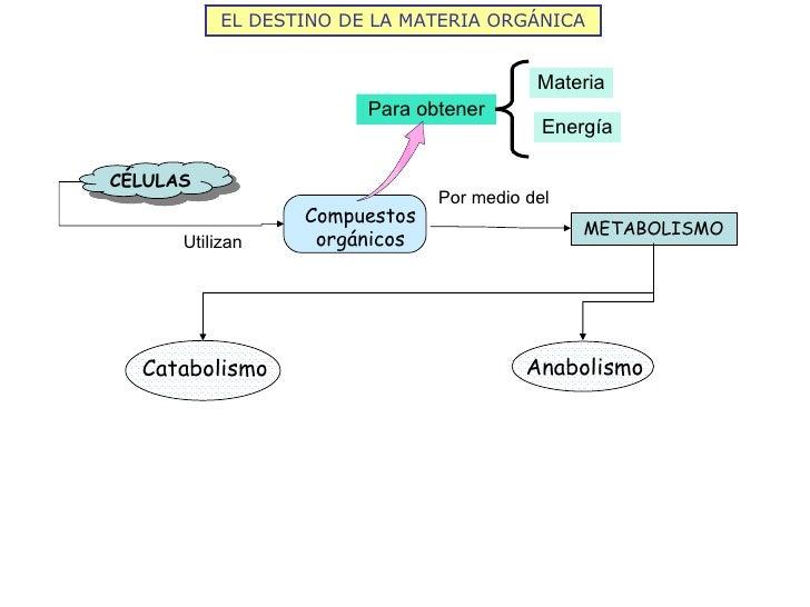 EL DESTINO DE LA MATERIA ORGÁNICA                                          Materia                        Para obtener    ...