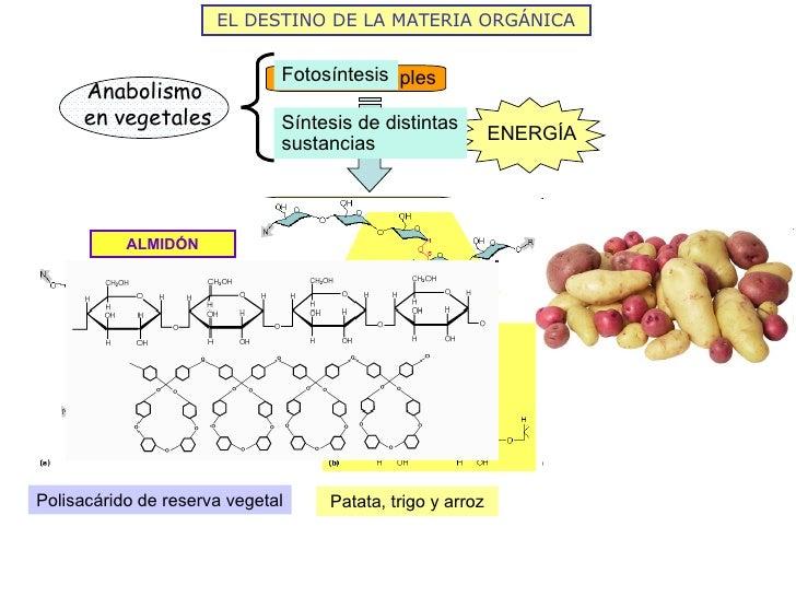 EL DESTINO DE LA MATERIA ORGÁNICA                             Fotosíntesis                             Moléculas simples  ...