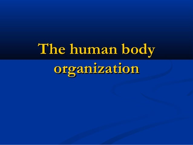 The human body organization
