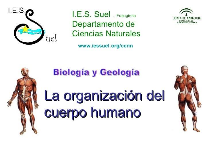 I.E.S. Suel  –   Fuengirola Departamento de Ciencias Naturales La organización del cuerpo humano Biología y Geología www.i...