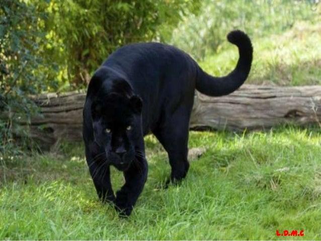 Pantera Negra: La Pantera Negra