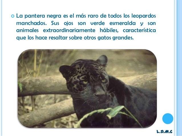 Los Gatos Negros / Los Kifers - Hey Hey Bunny / El Sol Es Una Droga