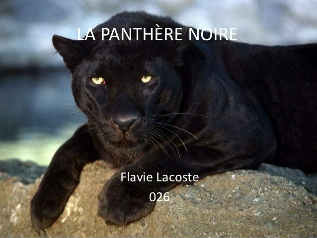 LA PANTHÈRE NOIRE  Flavie Lacoste 026