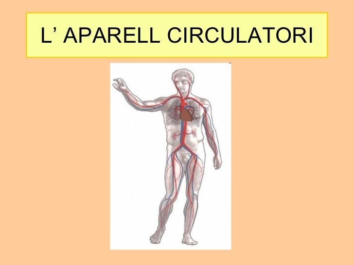 Resultado de imagen de l'aparell circulatori