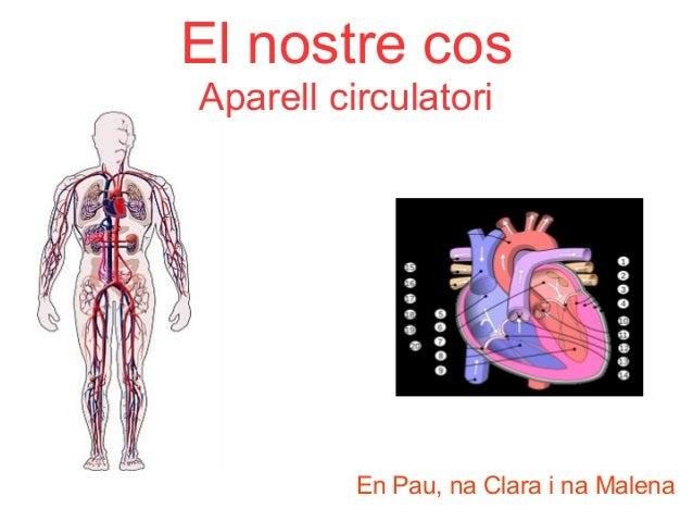 El nostre cos Aparell circulatori  En Pau, na Clara i na Malena