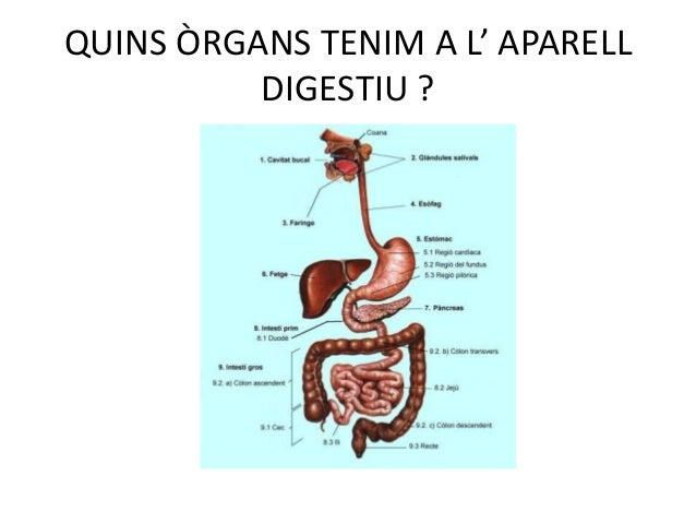 L Aparell Digestiu