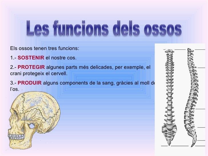 Els ossos tenen tres funcions: 1.-  SOSTENIR  el nostre cos. 2.-  PROTEGIR  algunes parts més delicades, per exemple, el c...
