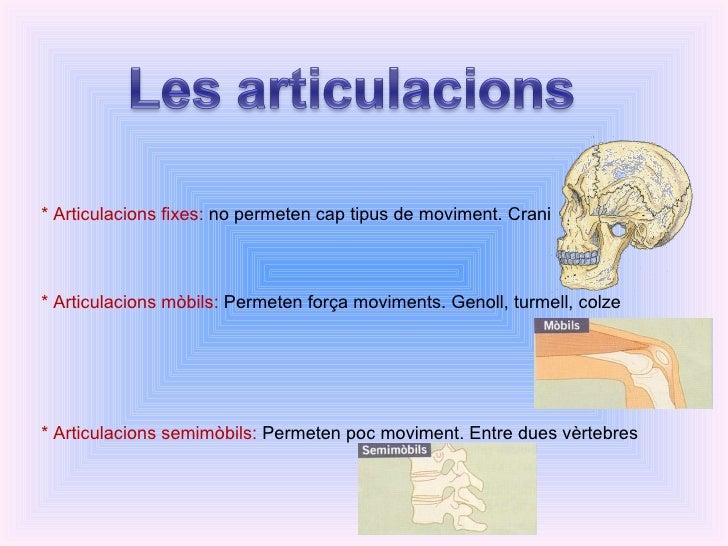 * Articulacions fixes:  no permeten cap tipus de moviment. Crani * Articulacions mòbils:  Permeten força moviments. Genoll...