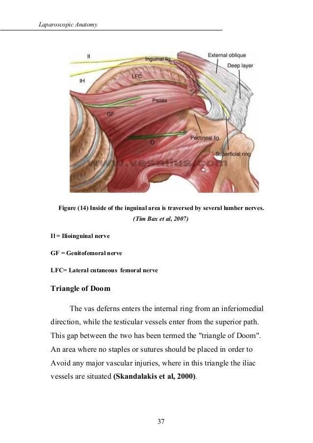 Laparoscopic Anatomy Of Inguinal Canal