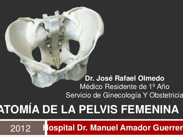 Dr. José Rafael Olmedo                  Médico Residente de 1º Año              Servicio de Ginecología Y ObstetriciaATOMÍ...