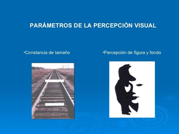 PARÁMETROS DE LA PERCEPCIÓN VISUAL <ul><li>Constancia de tamaño </li></ul><ul><li>Percepción de figura y fondo </li></ul>