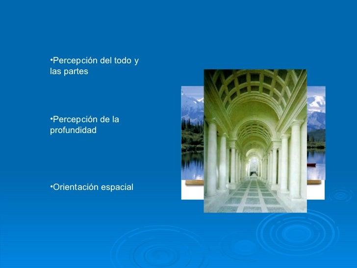 <ul><li>Percepción del todo y las partes </li></ul><ul><li>Percepción de la profundidad </li></ul><ul><li>Orientación espa...