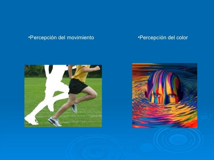 <ul><li>Percepción del movimiento </li></ul><ul><li>Percepción del color </li></ul>