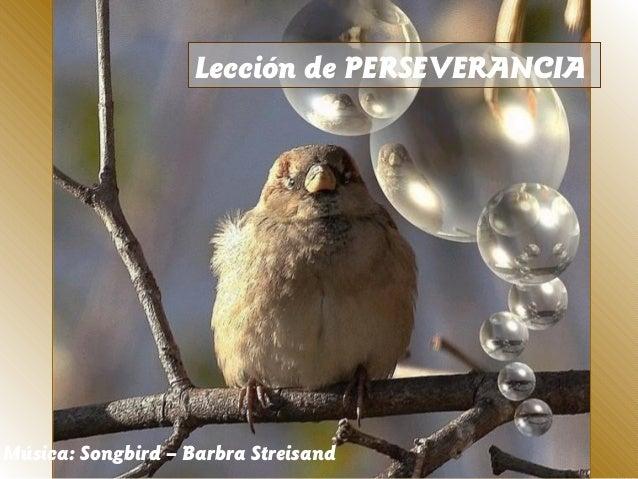 Lección de PERSEVERANCIAMúsica: Songbird – Barbra Streisand