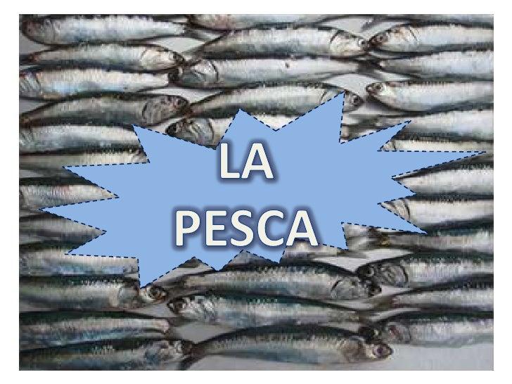División de                       la Pesca        Tipo de                       Lugar de       Extracción                 ...