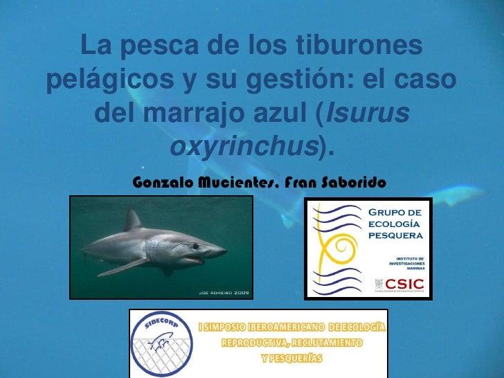 La pesca de los tiburones pelágicos y su gestión: el caso     del marrajo azul (Isurus          oxyrinchus).       Gonzalo...