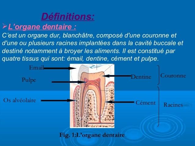 La physiologie de l'organe dentaire Slide 3
