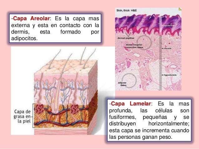 Corpusculo de pacini pdf to word
