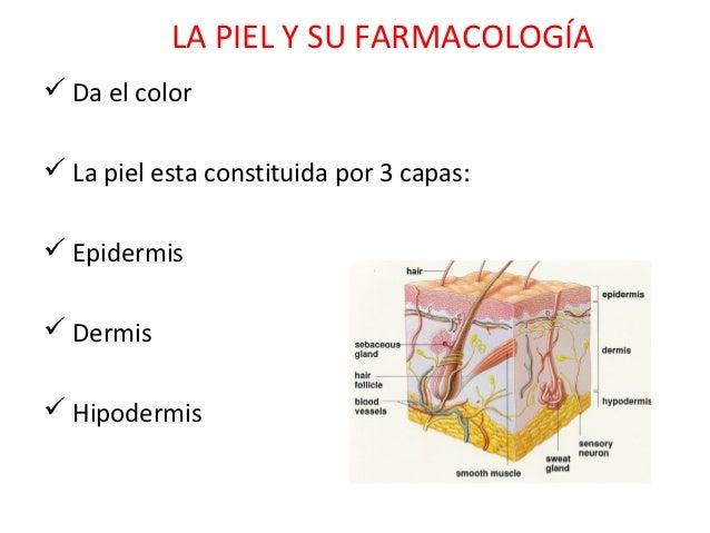 LA PIEL Y SU FARMACOLOGÍA Da el color La piel esta constituida por 3 capas: Epidermis Dermis Hipodermis