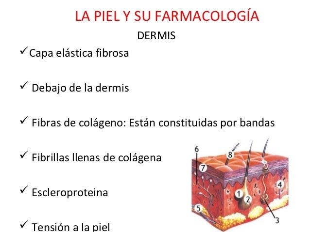 LA PIEL Y SU FARMACOLOGÍA                         DERMISCapa elástica fibrosa Debajo de la dermis Fibras de colágeno: E...