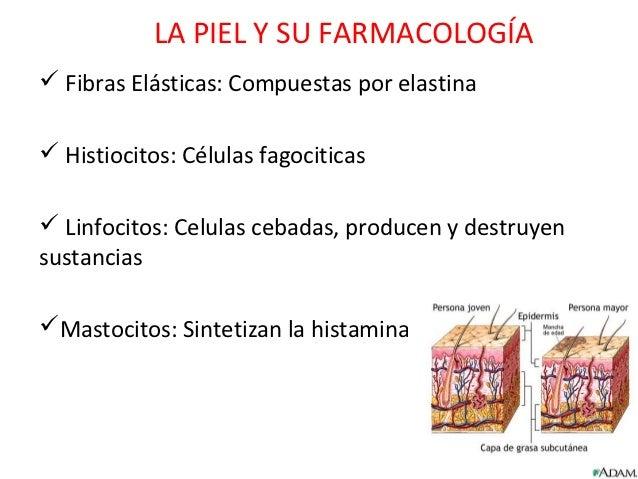 LA PIEL Y SU FARMACOLOGÍA Fibras Elásticas: Compuestas por elastina Histiocitos: Células fagociticas Linfocitos: Celula...