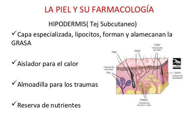 LA PIEL Y SU FARMACOLOGÍA           HIPODERMIS( Tej Subcutaneo)Capa especializada, lipocitos, forman y alamecanan laGRASA...