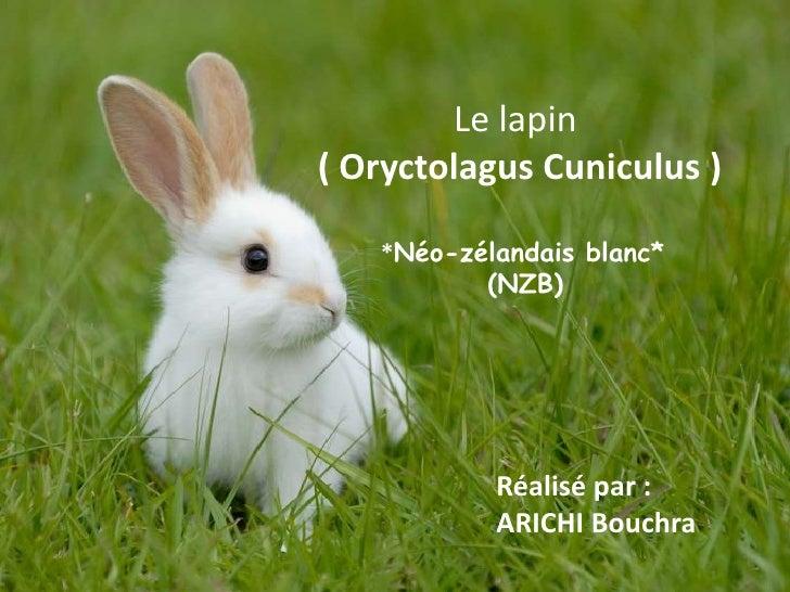 Le lapin( Oryctolagus Cuniculus )   *Néo-zélandais blanc*          (NZB)           Réalisé par :           ARICHI Bouchra