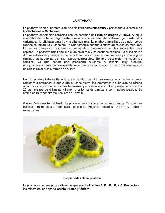 LA PITAHAYA La pitahaya tiene el nombre científico de Hylocereusundatus y pertenece a la familia de lasCactáceas o Cactace...