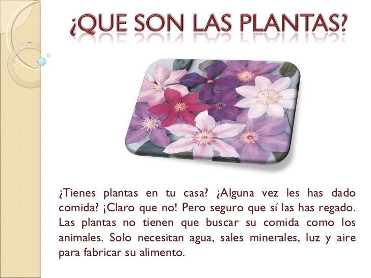¿Tienes plantas en tu casa? ¿Alguna vez les has dado comida? ¡Claro que no! Pero seguro que sí las has regado. Las plantas...