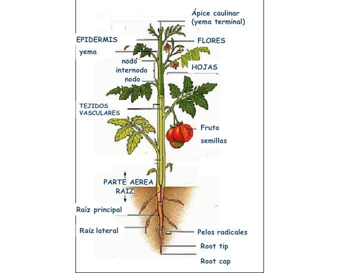 Respiracion y fotosintesis de la planta
