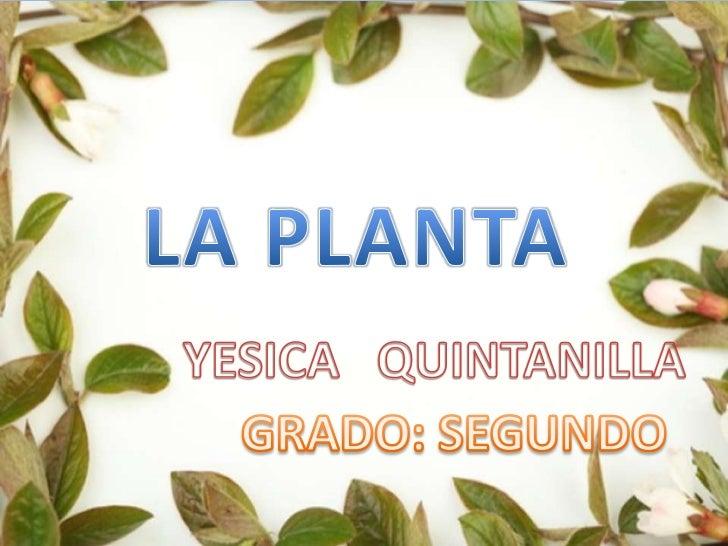 • Las plantas son organismos  vivientes autótrofos  fotosintéticos  pertenecientes al mundo  vegetal que pueden habitar  e...