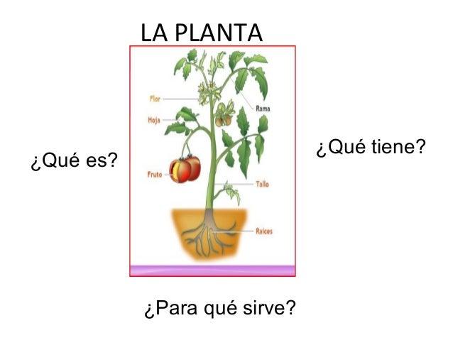 La planta y su utilidad 1 - Para que sirve una vaporeta ...