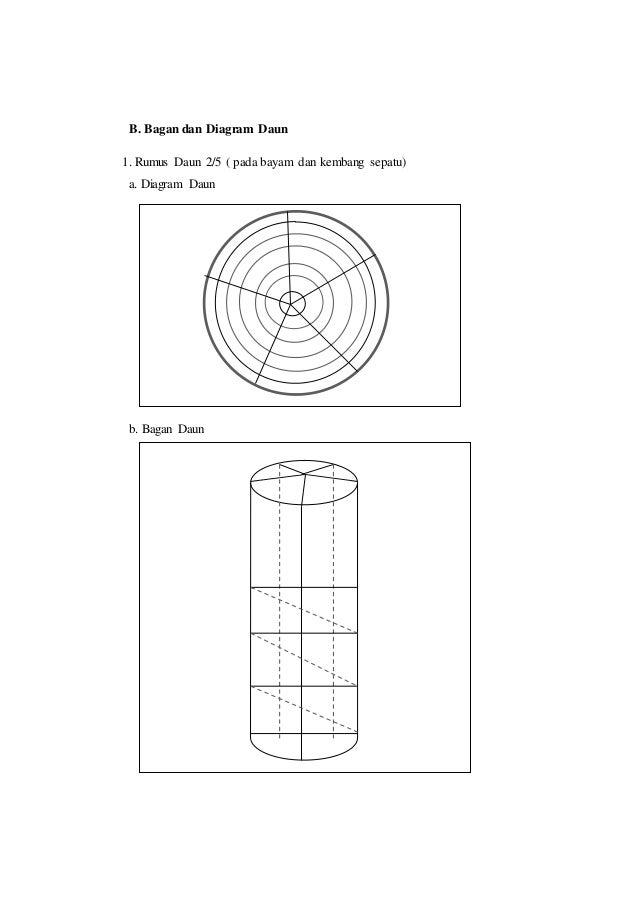 Laporan praktikum 3 tata letak daun rumus daun dan diagram daun morf batang 10 ccuart Gallery