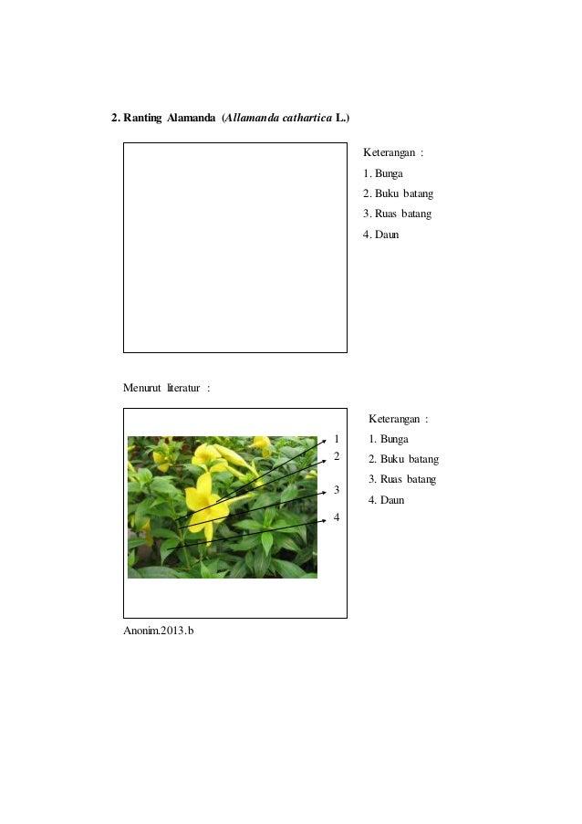 Laporan praktikum 3 tata letak daun rumus daun dan diagram daun morf daun 4 5 6 ccuart Image collections