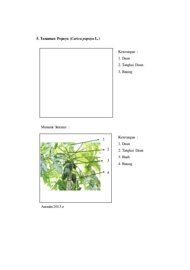 Laporan praktikum 3 tata letak daun rumus daun dan diagram daun morf batang 9 5 ccuart Image collections
