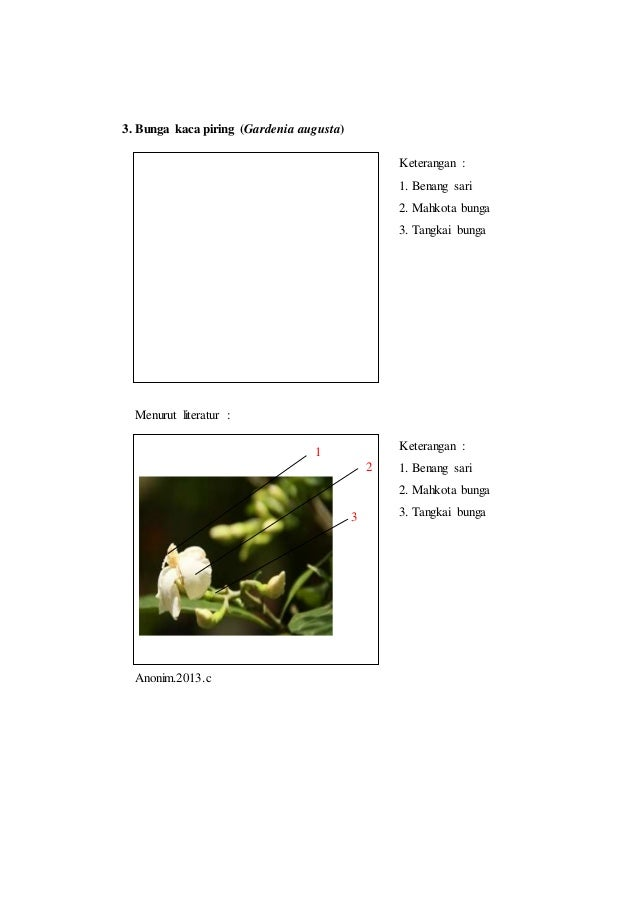 Laporan praktikum 5 bunga tunggal morfologi tumbuhan tangkai bunga 6 ccuart Images