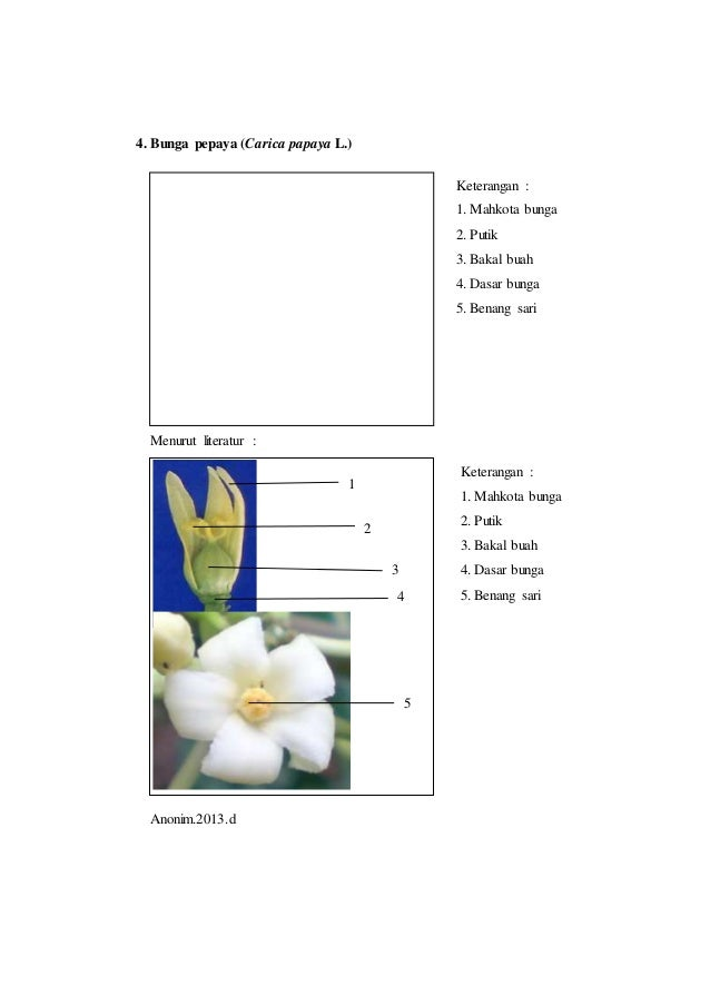 Laporan praktikum 5 bunga tunggal morfologi tumbuhan tangkai bunga 7 ccuart Images