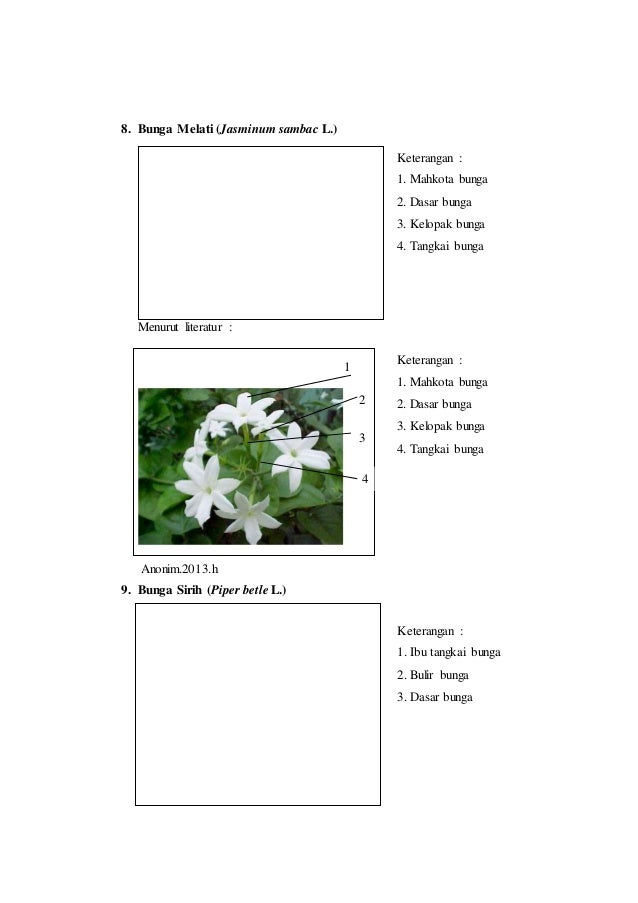 Laporan praktikum 6 bunga majemuk morfologi tumbuhan benang sari 4 4 10 8 bunga ccuart Choice Image