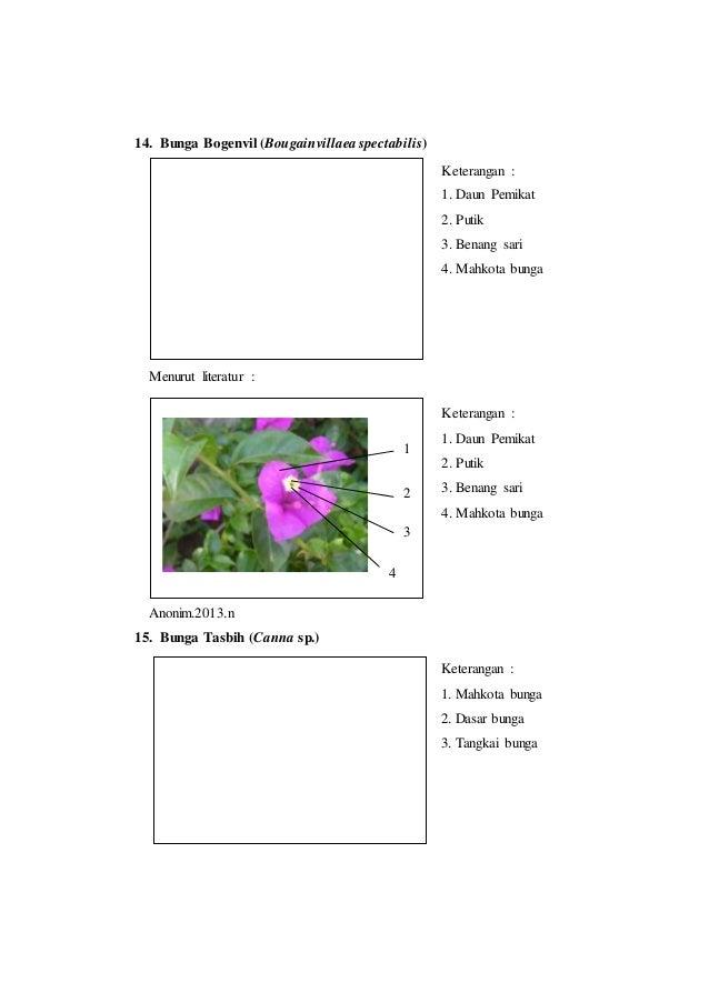 Laporan praktikum 6 bunga majemuk morfologi tumbuhan mahkota bunga 5 14 ccuart Image collections