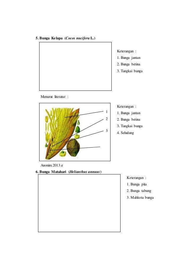 Laporan praktikum 6 bunga majemuk morfologi tumbuhan putik bunga jantan bunga betina 8 ccuart Image collections