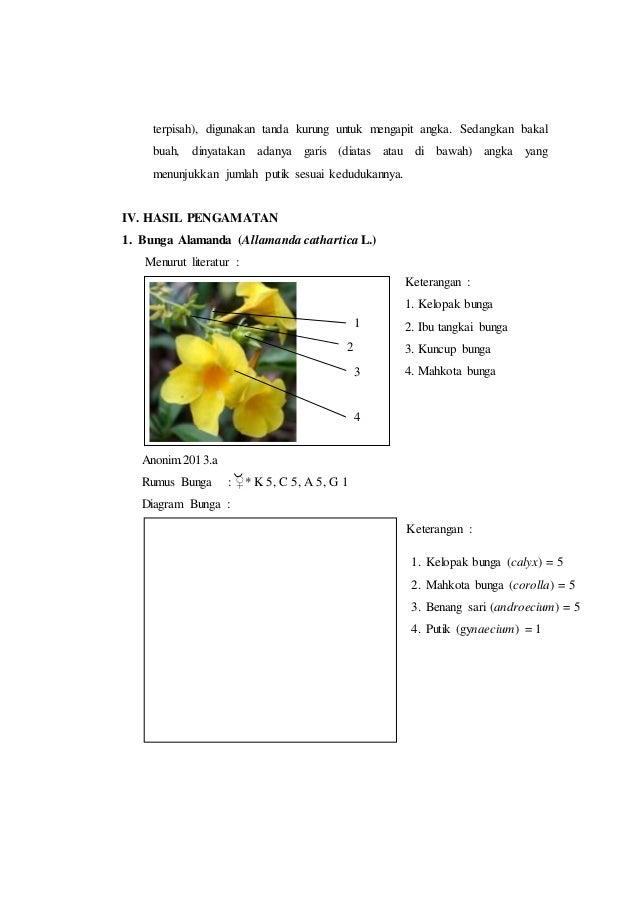 Laporan praktikum 7 rumus bunga dan diagram bunga morfologi tumbuhan 4 ccuart Images