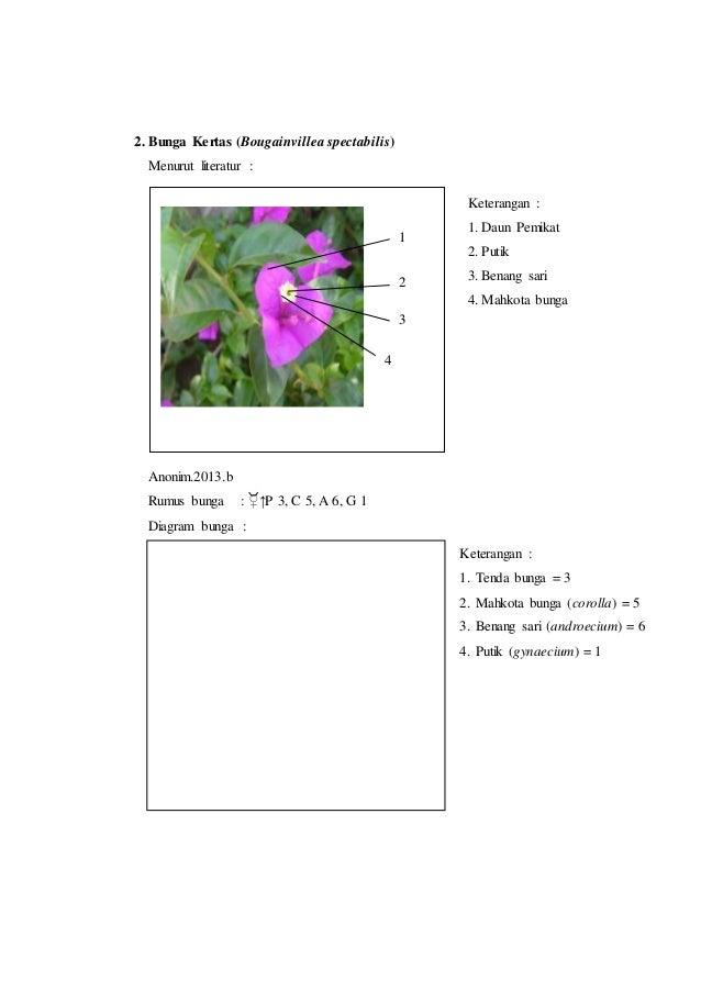 Laporan praktikum 7 rumus bunga dan diagram bunga morfologi tumbuhan putik gynaecium 1 5 2 ccuart Image collections