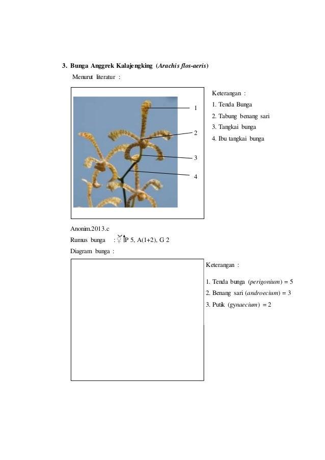 Laporan praktikum 7 rumus bunga dan diagram bunga morfologi tumbuhan putik gynaecium 1 6 3 ccuart Image collections