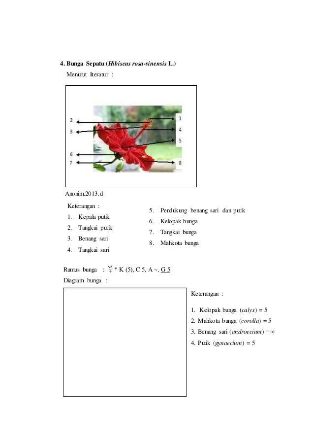 Laporan praktikum 7 rumus bunga dan diagram bunga morfologi tumbuhan putik gynaecium 2 7 4 ccuart Images