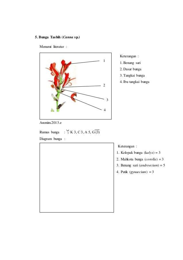 Laporan praktikum 7 rumus bunga dan diagram bunga morfologi tumbuhan putik gynaecium 5 8 5 bunga tasbih ccuart Image collections