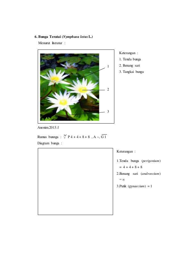 Laporan praktikum 7 rumus bunga dan diagram bunga morfologi tumbuhan putik gynaecium 3 9 6 ccuart Image collections